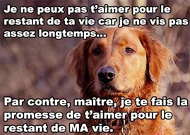 Vign_amour_pour_la_vie