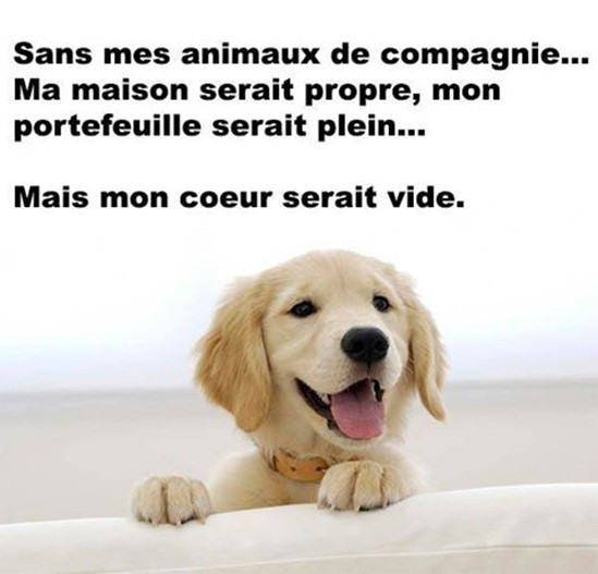 Vign_chien_6
