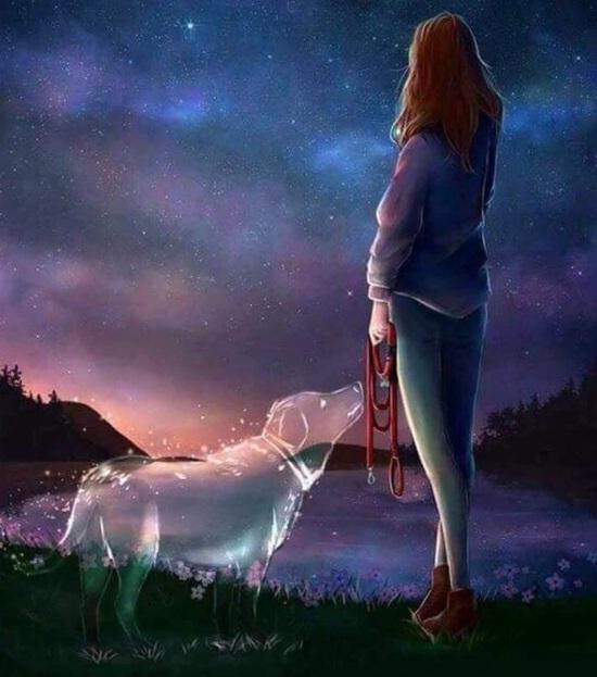 Vign_chien_adieu