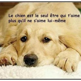 Vign_chien_amour3