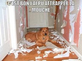 Vign_chien_attrape_mouche