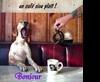 Vign_chien_au_resto