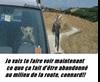 Vign_chien_au_volant
