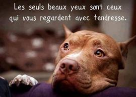 Vign_chien_beaux_yeux