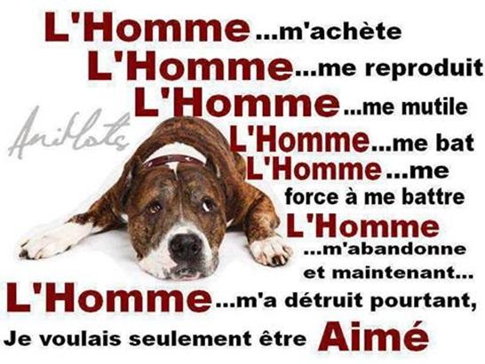 Vign_chien_cri_du_coeur