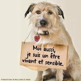 Vign_chien_emotion