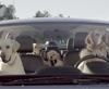 Vign_chien_en_voiture