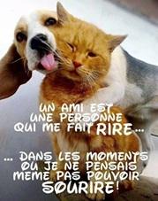 Vign_chien_et_amis