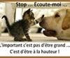 Vign_chien_et_chat