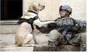 Vign_chien_et_soldat