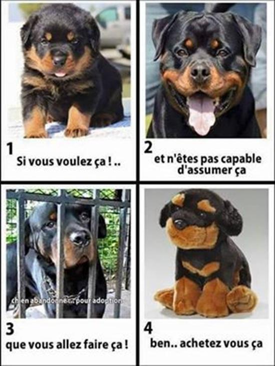 Vign_chien_faire_sa_avant_d_acheter