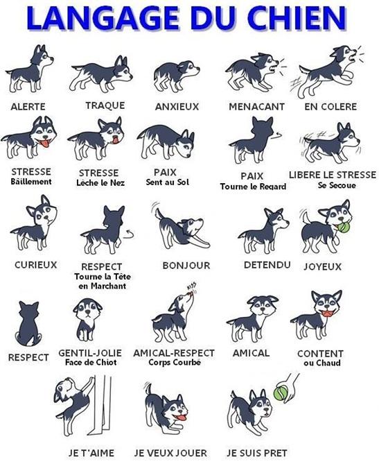 Vign_chien_language