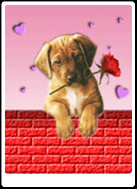 Vign_chien_logo_amour
