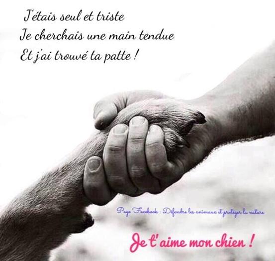 Vign_chien_main_ds_la_patte