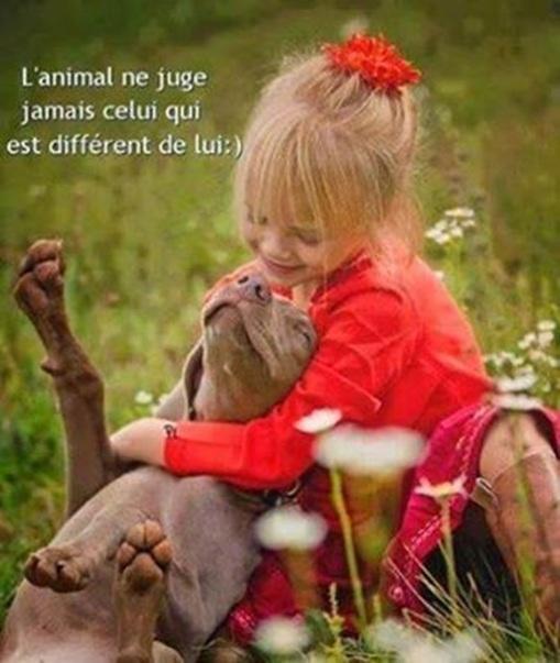 Vign_chien_ne_juge_pas