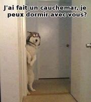 Vign_chien_qui_a_fait_cauchemard