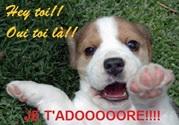 Vign_chien_qui_adore