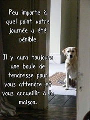 Vign_chien_qui_attend_maitre