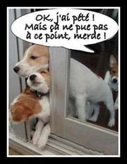 Vign_chien_qui_pete