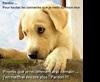 Vign_chien_qui_prie