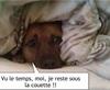 Vign_chien_sous_couverte