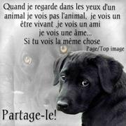 Vign_chien_yeux