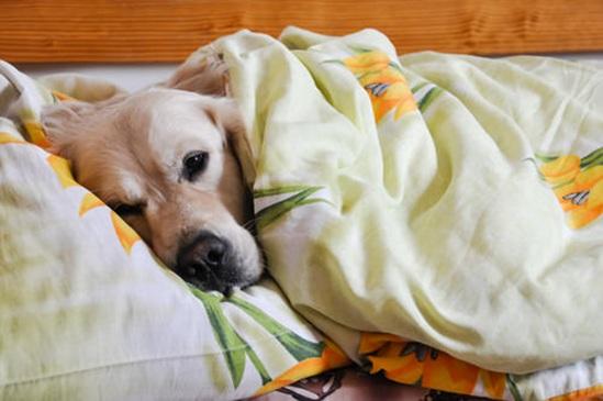 Vign_dormir_chien_3