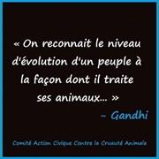 Vign_pensee_de_gandhi