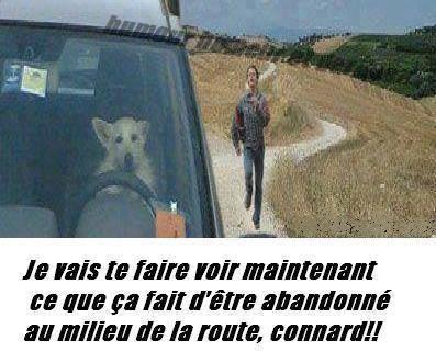 chien_au_volant