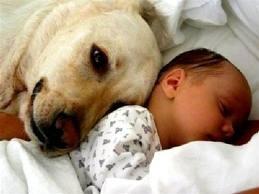 vign_chien_bb_3