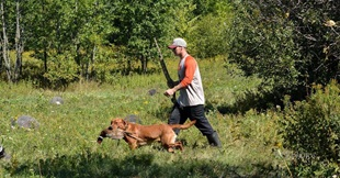 vign_chien_chasse_4