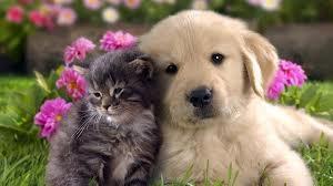 vign_chien_chat_4