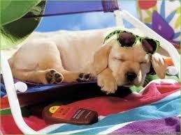 vign_chien_en_vacance