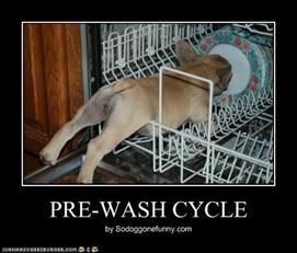 vign_chien_lave_vaisselle
