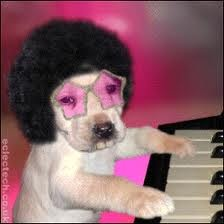 vign_chien_musicien